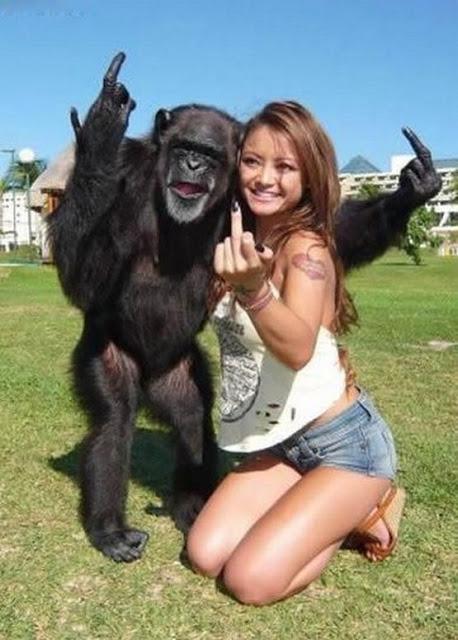 crazy_monkeys_14
