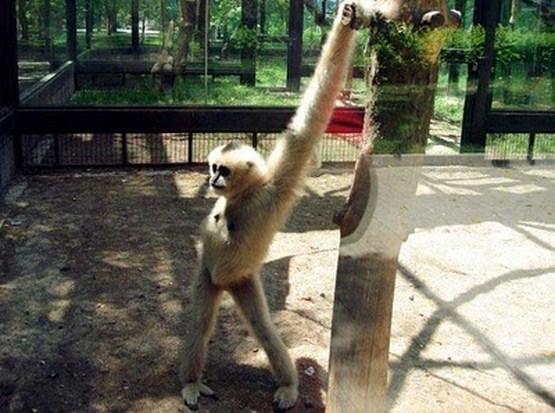 crazy_monkeys_16