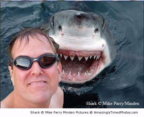 Shark-photobomb-resizecrop--