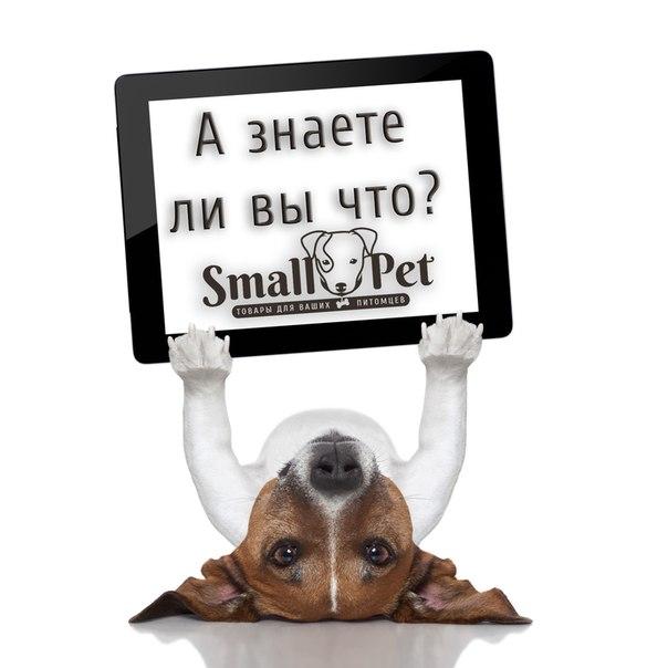 SmallPet