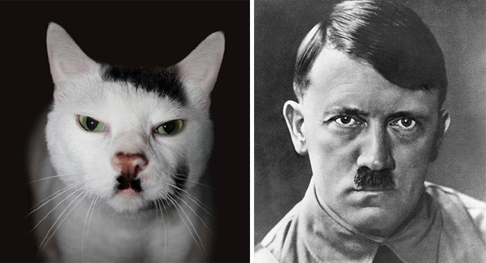 hitler_cat
