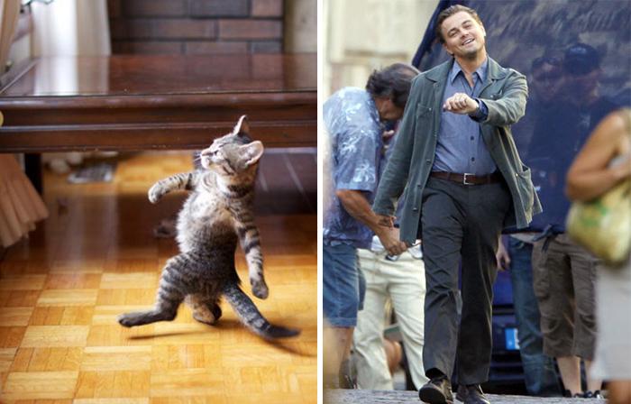 leo_cat
