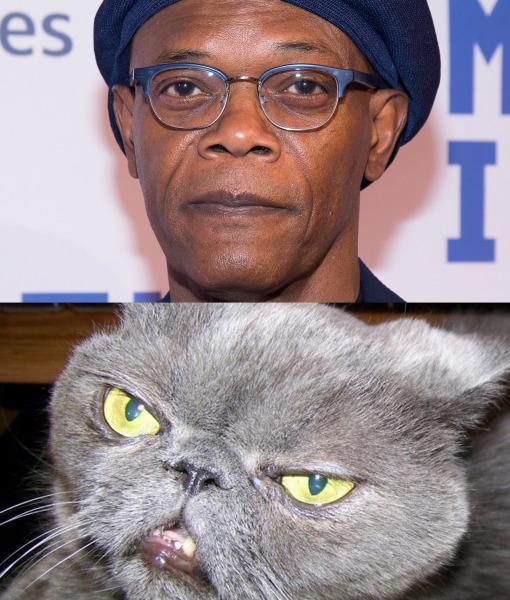 sam-jackson-cat