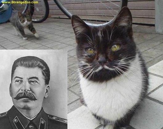 stalin_cat