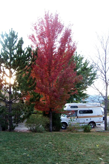 Silver Maple in Red
