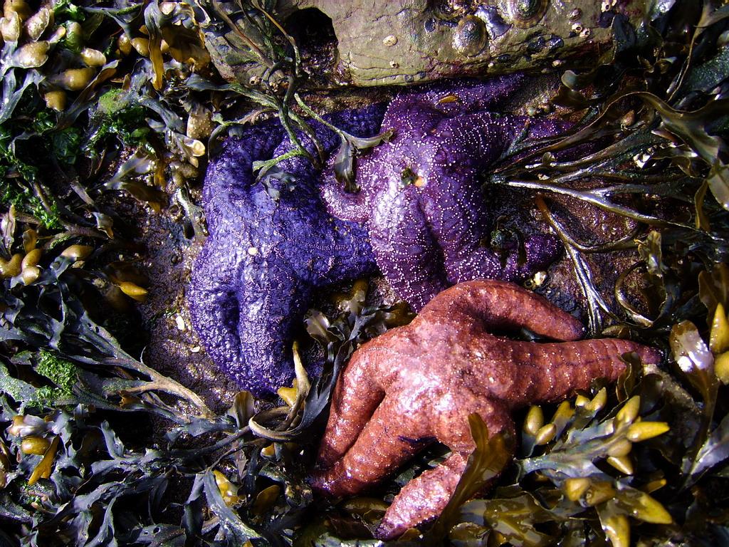 starfishDrumbeg3