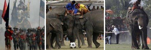 surin_elephant festival