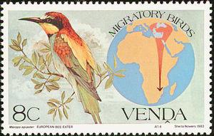 European-Bee-eater----Merops-apiaster