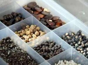 1332365414_kak-pravilno-hranit-semena-skolko-semena-sohranyayut-vshozhest