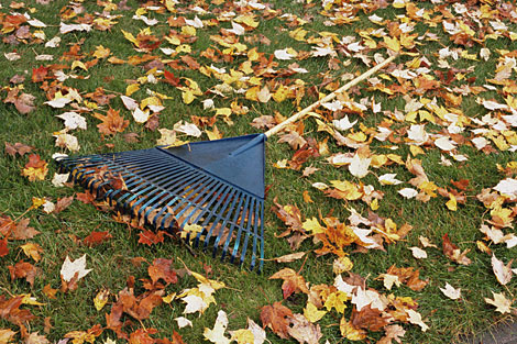 fall-leaves-rake-470-0908