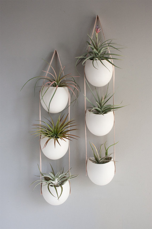 1062622_0_8-7992-contemporary-indoor-pots-and-planters