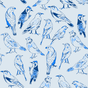 birds_blue
