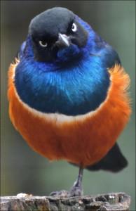 82496948_birds06
