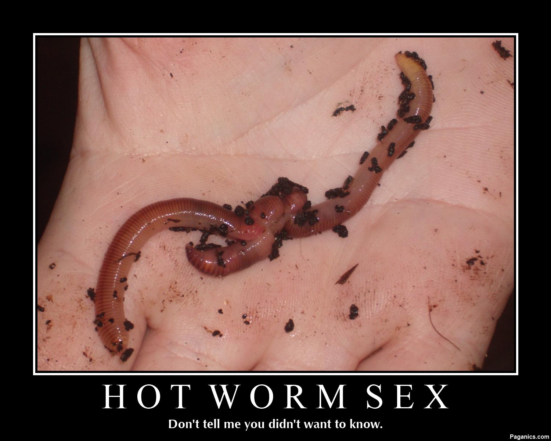 HotWormSex