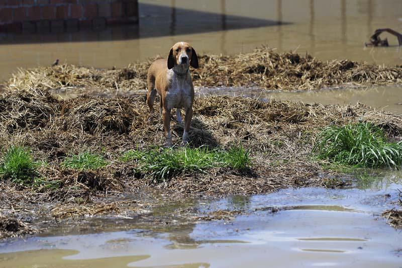 zivotinje_poplava1_665801S0
