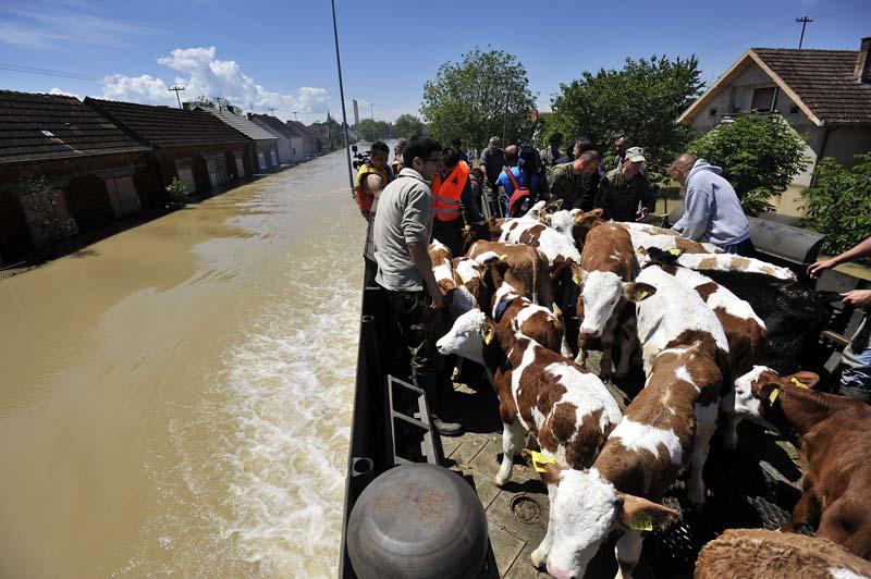 zivotinje_poplava2_665799S0