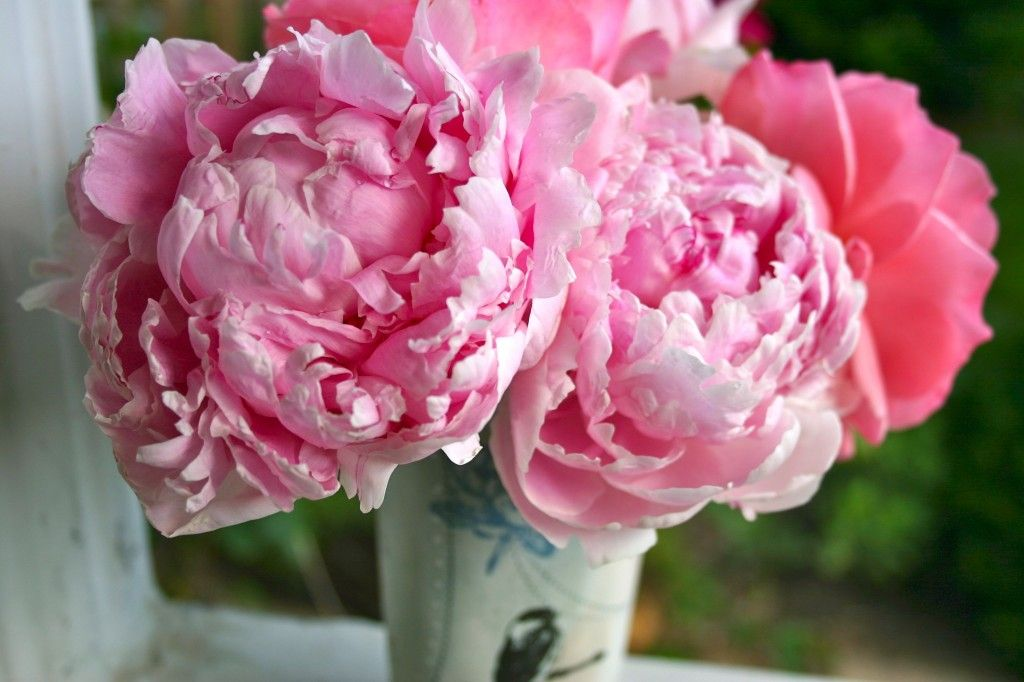 pink_peony_flower_meaning