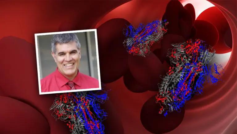 Коллаж изображений: Report24, состоящий из 3D-моделей белка-шипа, 3D-модели кровеносного сосуда, созданной @ Vladdeep / pixabay, и портрета профессора Брайдла.