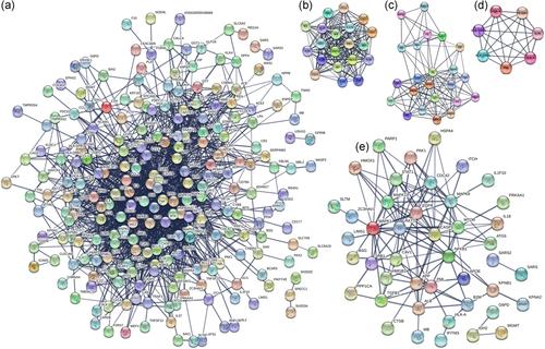 Строительство сети PPI. (а) Построение сети PPI из 284 генов, связанных с SCoV2, с показателем коэкспрессии более 0,7. (b – d) Анализ MCODE всей сети PPI выявил три модуля (балл по модулю 1 = 18, балл по модулю 2 = 11 и балл по модулю 3 = 7). (e) Построение сети PPI из 52 регулируемых иве белков, связанных с SCoV2, с показателем коэкспрессии более 0,7. ИПП - белок-белковое взаимодействие; SCoV2,