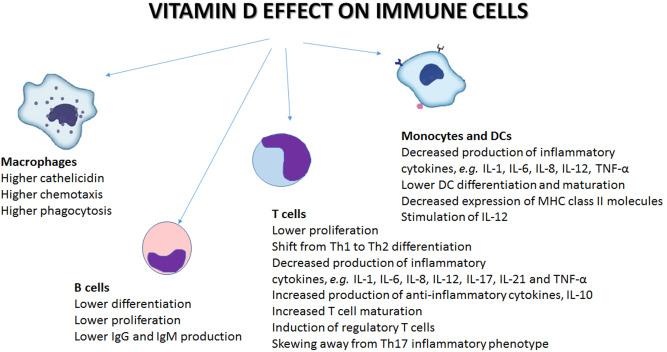 Рис. 2 . Влияние витамина D на иммунные клетки. Витамин D действует на различные иммунные клетки, включая В- и Т-клетки, макрофаги, моноциты и дендритные клетки. Конечный результат - регуляция иммунного ответа. DC: дендритная клетка; Ig: иммуноглобулин; IL: интерлейкин; MHC: главный комплекс гистосовместимости; Th: Т-хелперная клетка; TNF-α: фактор некроза опухоли-α.