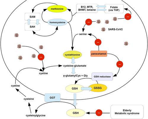 Рисунок, показывающий возможный механизм обострения истощения GSH у субъектов, инфицированных КВ-2 парацетамолом. Как объясняется в тексте, КВ2 отрицательно влияет на сериновый путь, ведущий к синтезу цистатионина и поглощению фолиевой кислоты, нарушая регуляцию одноуглеродного метаболизма. Фолат может быть восстановлен до тетрагидрофолата (ТГФ), а затем преобразован в 5-метил-ТГФ, тогда как реакция, катализируемая метионинсинтетазой, переносит метильную группу 5-метил-ТГФ на гомоцистеин, образуя метионин. КВ2 нарушает также другие пути обмена тиолами, такие как Cys. С другой стороны, парацетамол может ингибировать сериновый путь и путь серы-аминокислоты (см. Mast C, Dardevet D, Papet I. Влияние лекарств на метаболизм белков и аминокислот у пожилых людей: серная аминокислота и парацетамол). Nutr Res Rev. 2018 Dec; 31 (2): 179-192.), А также GSH-редуктазу (см. Rousar T, Pařík P, Kucera O, Bartos M, Červinková Z. Глутатионредуктаза ингибируется конъюгатом ацетаминофен-глутатион in vitro. Physiol Res. 2010 ; 59 (2): 225-232.). Стрелки с красным кружком и знаком минус = запрет. BHMT, бетаин-гомоцистеинметилтрансфераза; GSH, глутатион; GSSG, окисленный GSH; SAH, S-аденозилгомоцистеин; SAM, S-аденозилметионин; КВ2, тяжелый острый респираторный синдром,