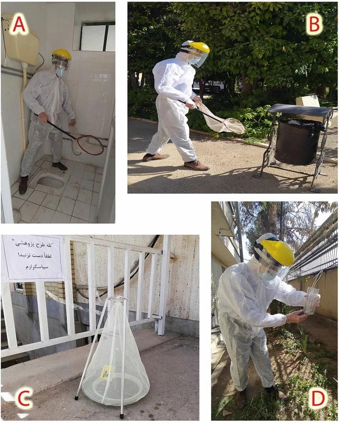 Отбор проб взрослых мух на открытом воздухе с использованием двух методов: ( A , B ) сбор сети в разных частях территории больницы, ( C , D ) две применяемые ловушки с наживкой (стандартный и искусственный типы).