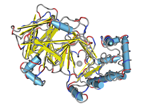 Молекула Рантеса человека.