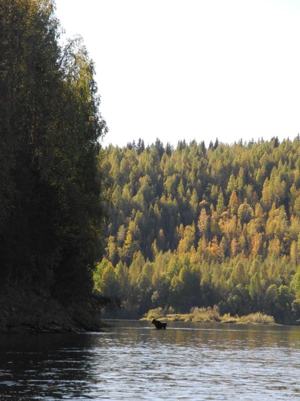 Рыбалка реке вишера пермский край