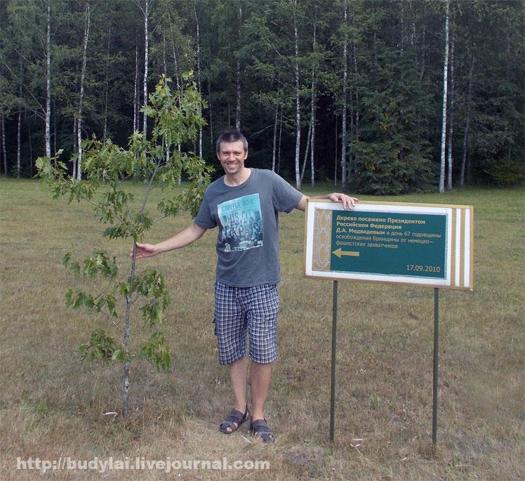 дерево-Медведева2