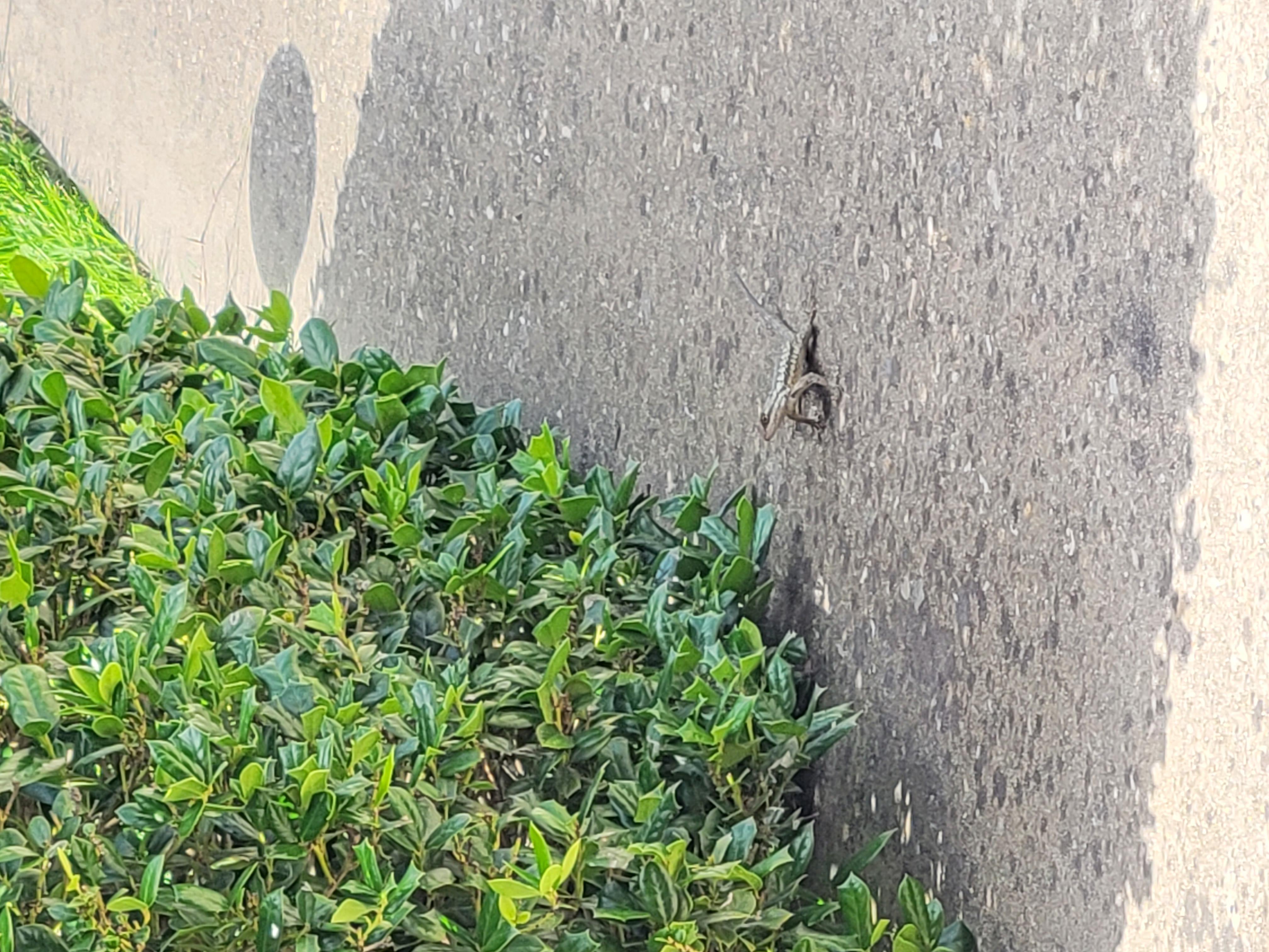 Ящерица у куста