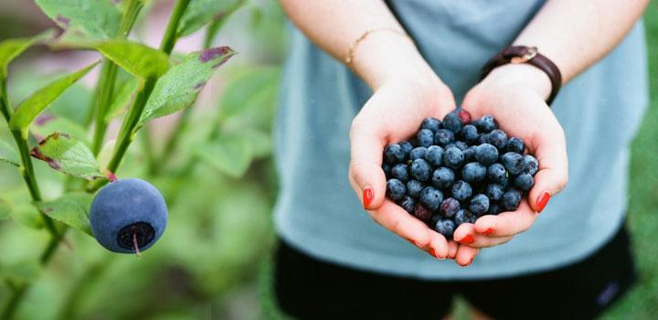 Как не переедать и избавиться от этой вредной привычки Как похудеть
