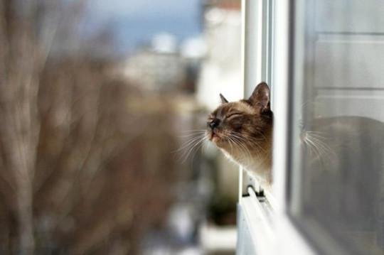 котик чувствует весну :) (из интернета)