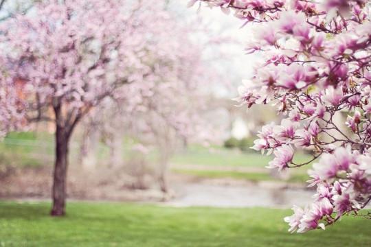 Весна приди!!!