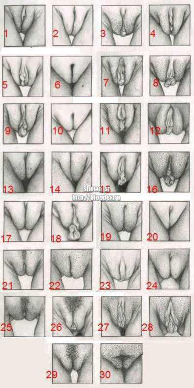 zhenskie-vagini-klassifikatsiya