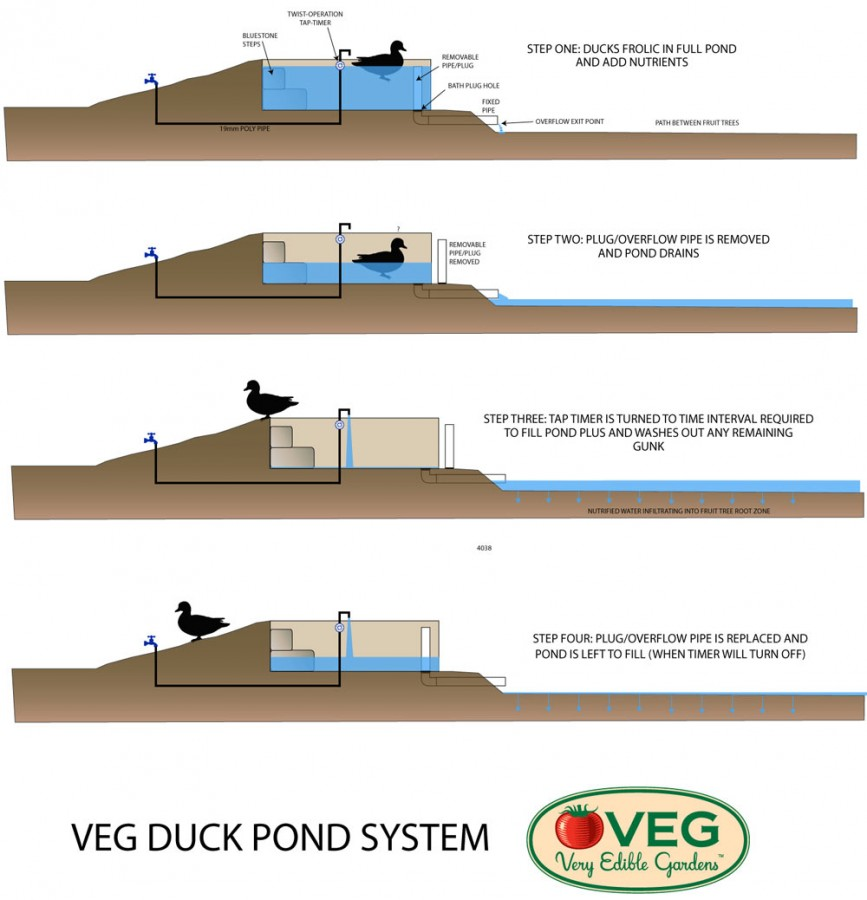 duck_pond_conundrum_02