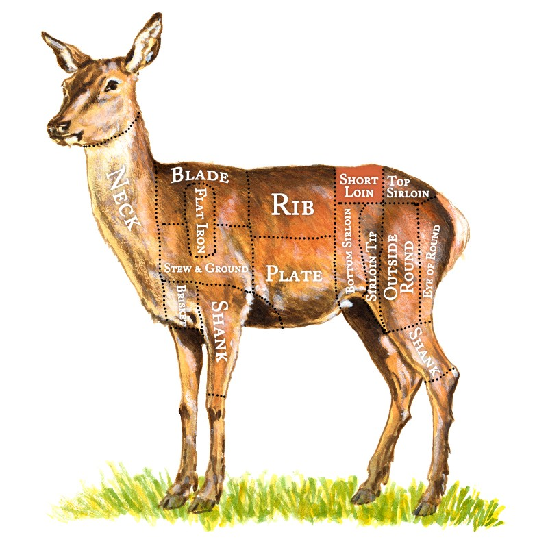 TheHealthyButcher-RealFoodToronto-Cut_Chart_Poster-Deer_Named_CutLines-Transparent-FINAL-Striploin-1600px