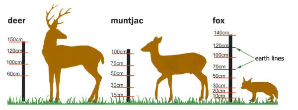 deer_fox_600