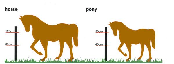 horse_pony_600