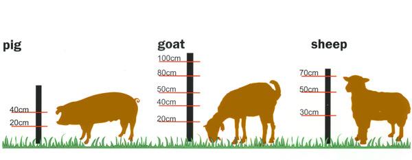 livestock_600
