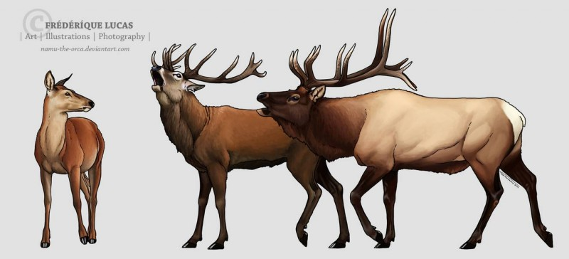 red_deer_and_wapiti_by_namu_the_orca_d804now-pre