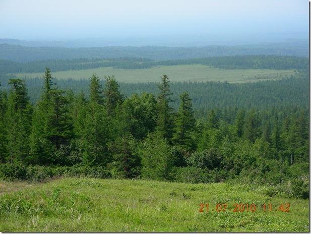Лес центра Камчатки
