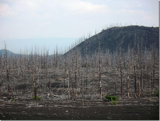 Лес, сожжёный Толбачиком.