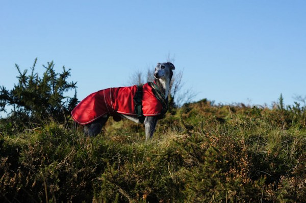Az in a coat on a hilltop