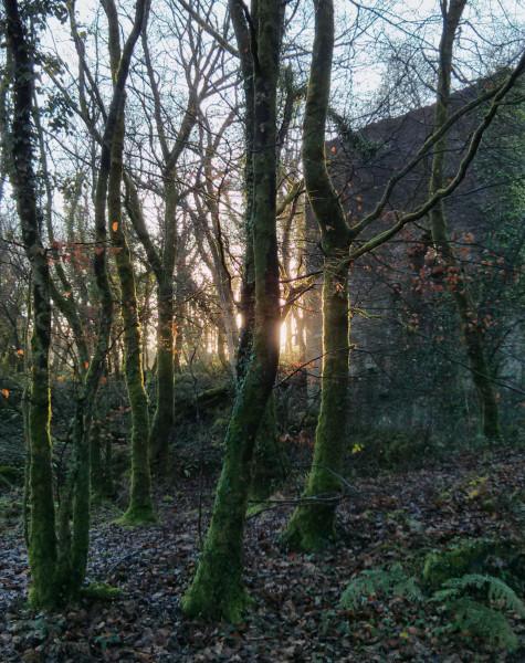 woodlandsunrise