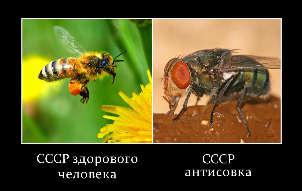 СССР здорового человека и больного