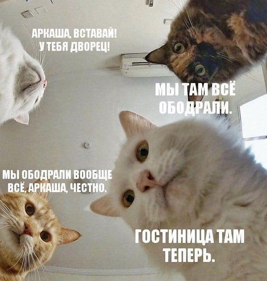 кошки ободрали