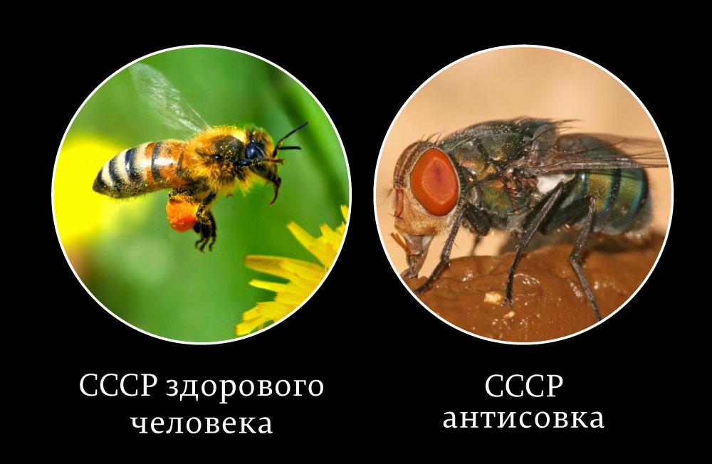 СССР-здорового-человека