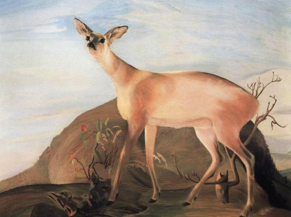 Deer (1893).jpg