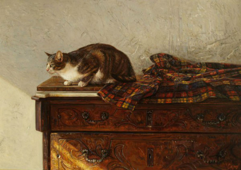 кошки 2.jpg