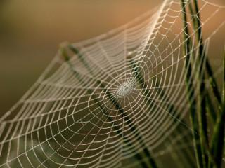 В России научились делать искусственную паутину